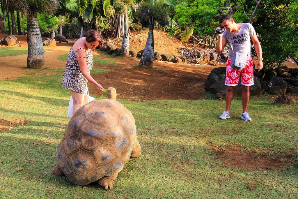 tartaruga che mangia le foglie con persone