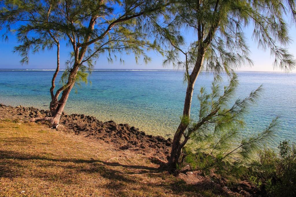 spiaggetta con alberi