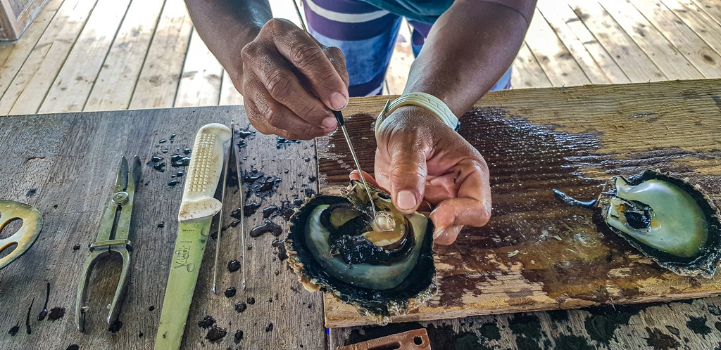 storia di una perla nera perla nella sacca perlifera