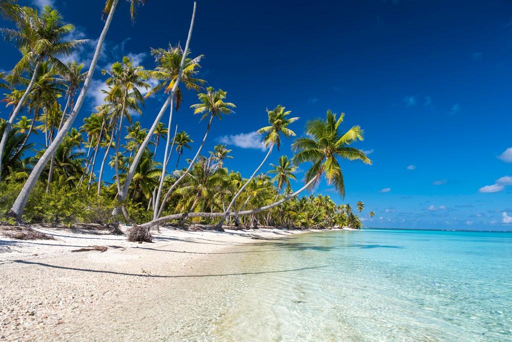 dove scattare foto da sogno a Fakarava spiaggia con palme protese sul mare