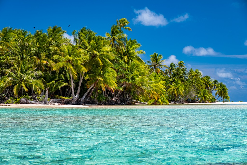 isola con palme