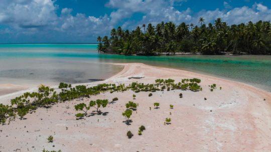 isole con palme nella laguna guida a fakarava