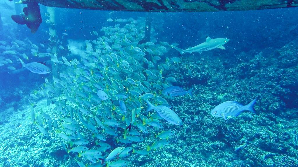 pesci e squali sott'acqua