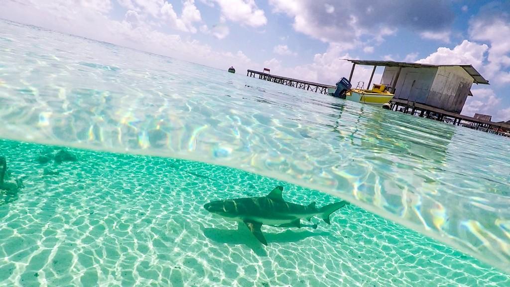 Escursione alle Sables Roses di Fakarava squalo sott'acqua