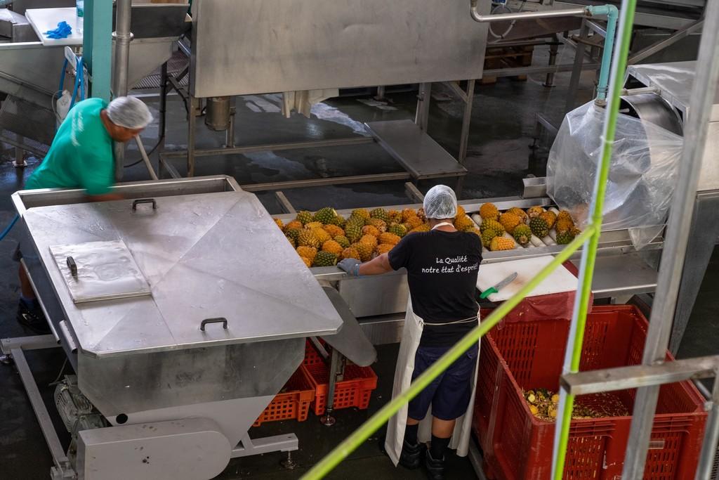 lavorazione della frutta