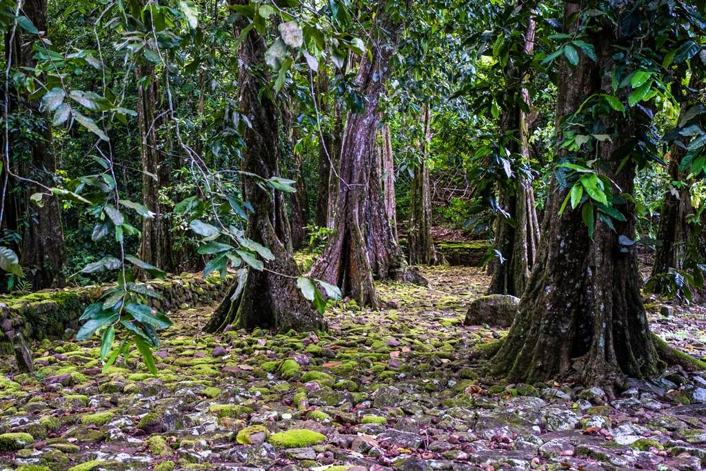 10 cose da non perdere a Moorea foresta
