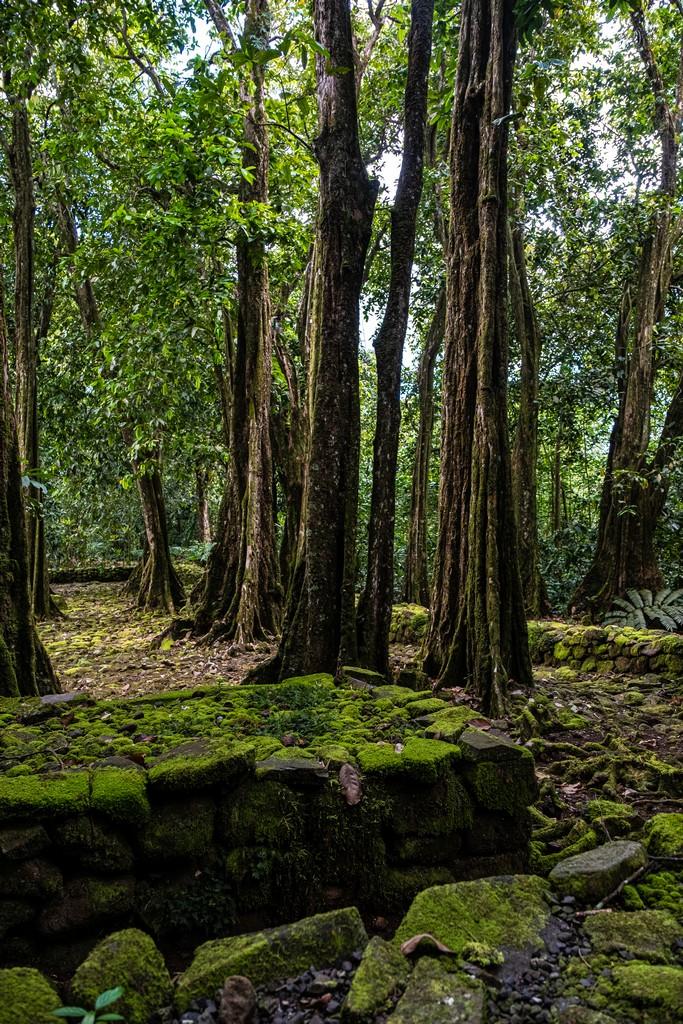 foresta a marae