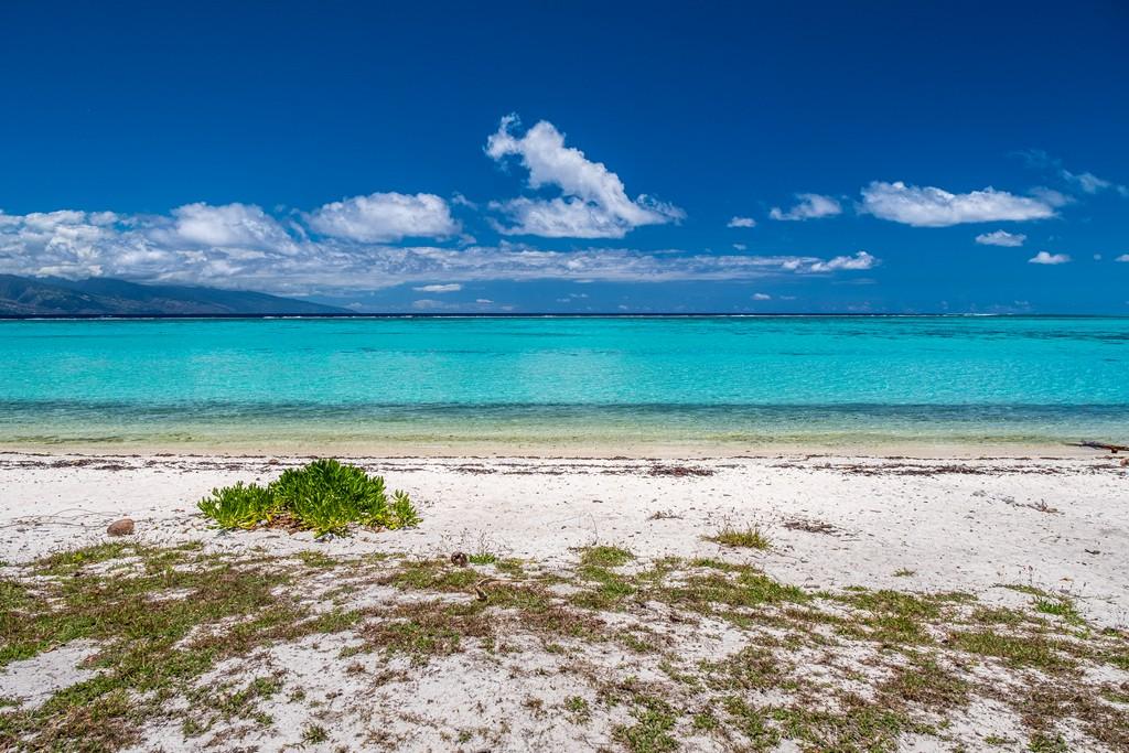 spiaggia bianca e mare turchese con cespuglio verde