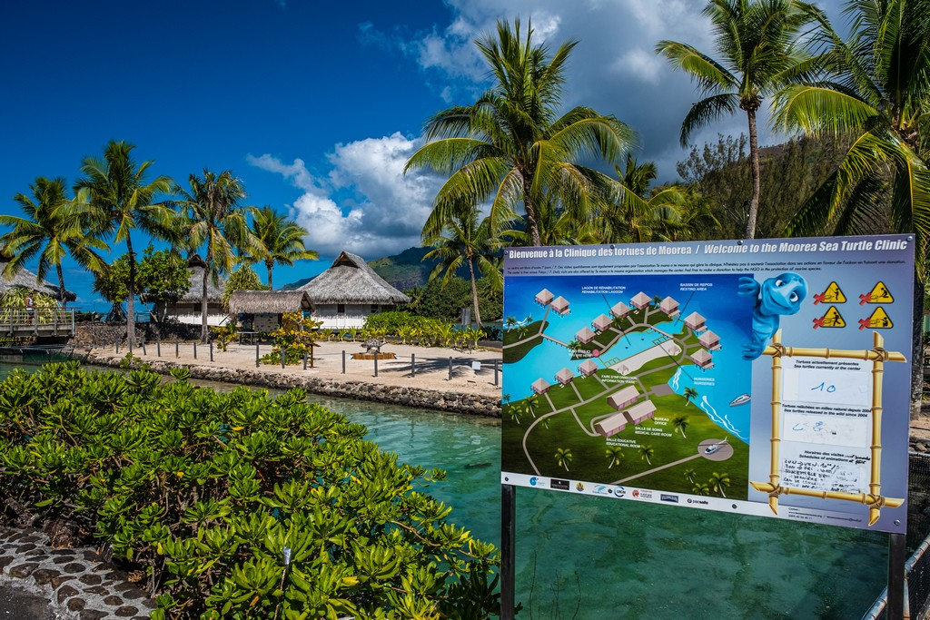 Te mana o te moana tartarughe a Moorea bungalow nel resort
