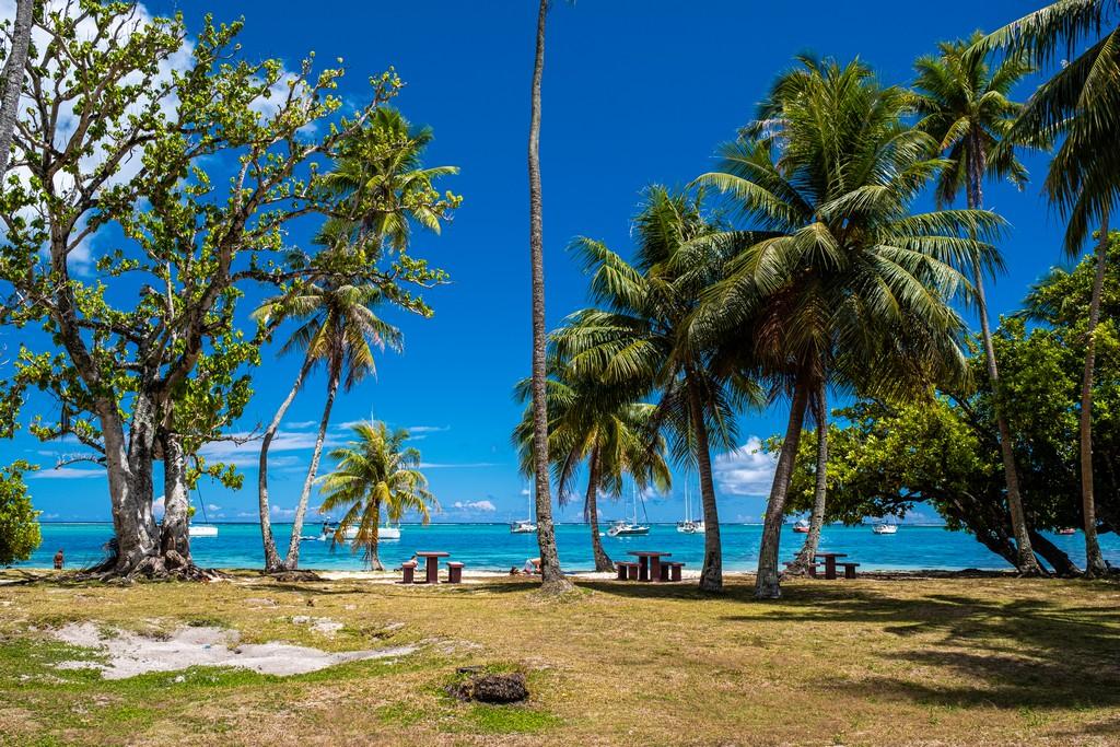 10 cose da non perdere a Moorea spiaggia con palme