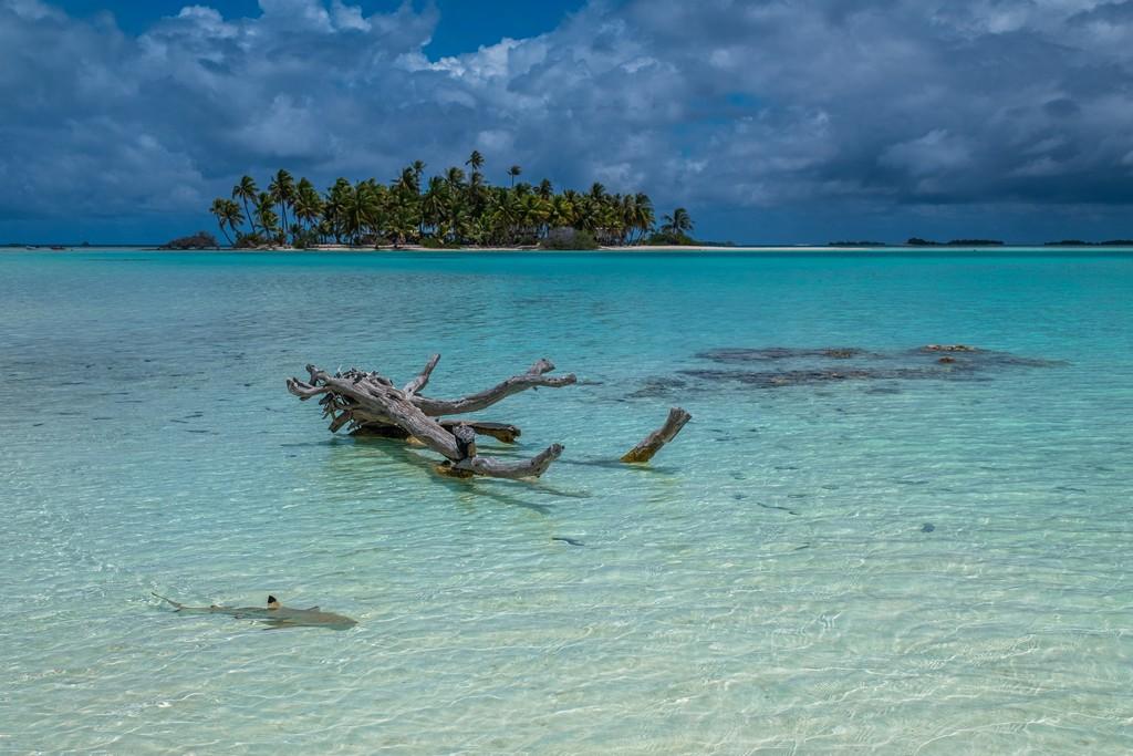 isole con palme sabbia bianca e laguna cristallina bassa e squalo