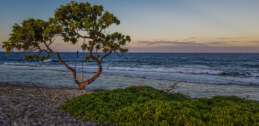 guida a Rangiroa, mare sullo sfondo con albero al tramonto