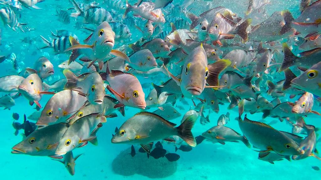 pesciolini in  acqua guida a Rangiroa