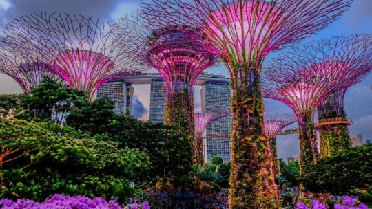 alberi artificiali illuminati con passerella di sera