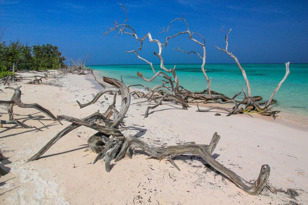 spiaggia di sabbia bianca con mare turchese e alberi secchi