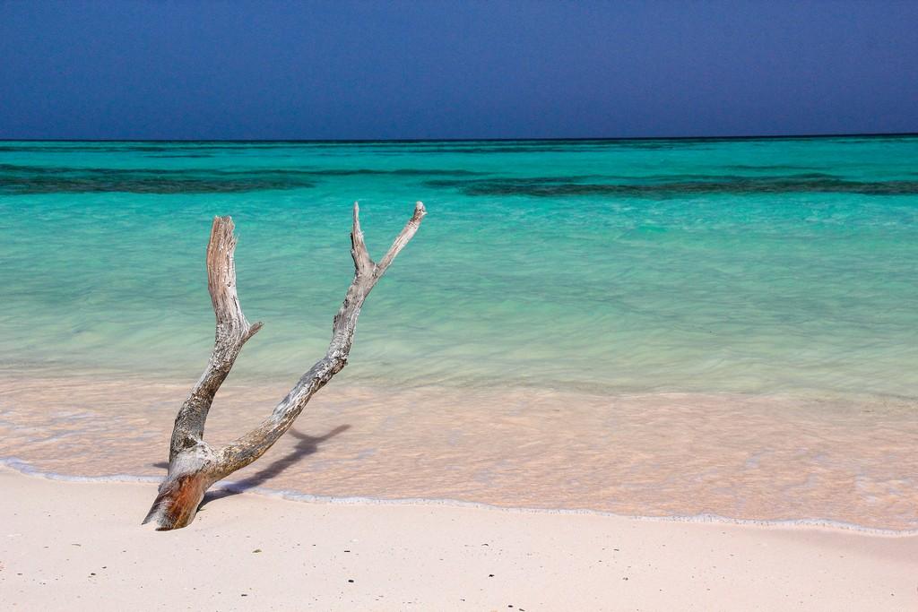 spiaggia di sabbia bianca con mare turchese con ramo secco