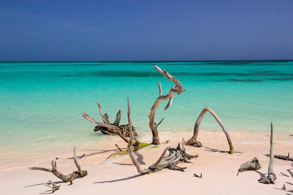 spiaggia di sabbia bianca con mare turchese con rami secchi