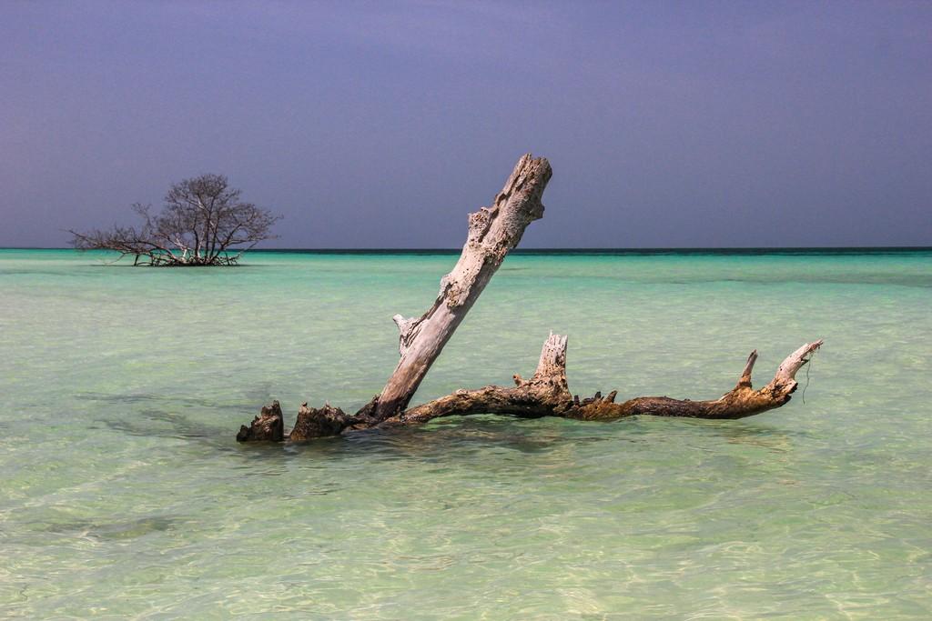 spiaggia di sabbia bianca con mare turchese mangrovia e rami secchi