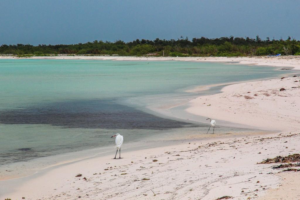 spiaggia di sabbia bianca con mare turchese e aironi