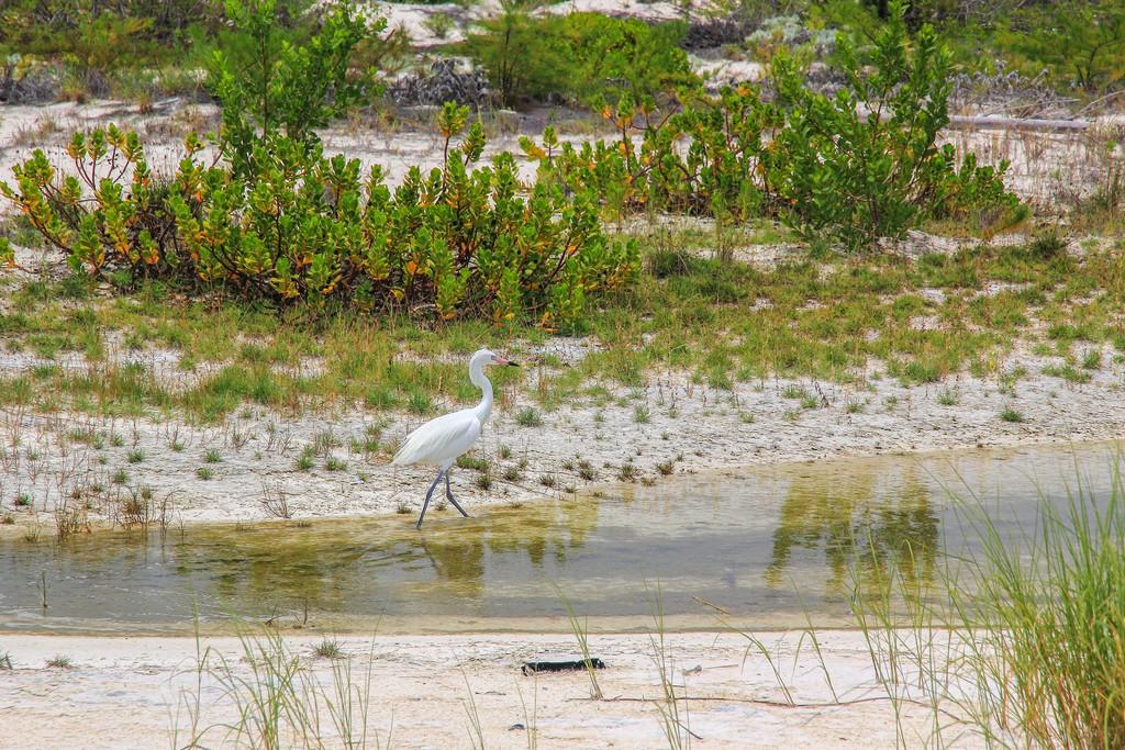 airone bianco sulla spiaggia