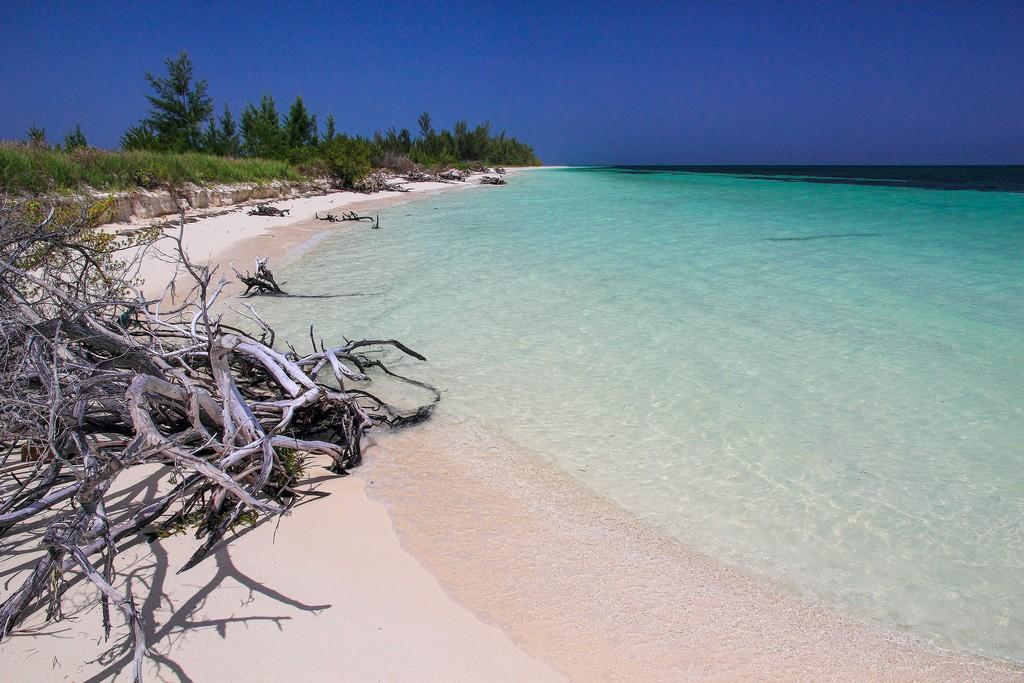 spiaggia di sabbia bianca con mare turchese alberi secchi e vegetazione bassa