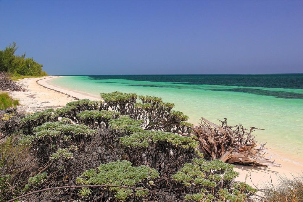 spiaggia di sabbia bianca con mare turchese con vegetazione bassa