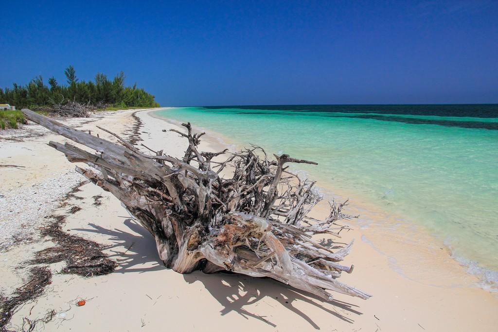 spiaggia di sabbia bianca con mare turchese con albero secco