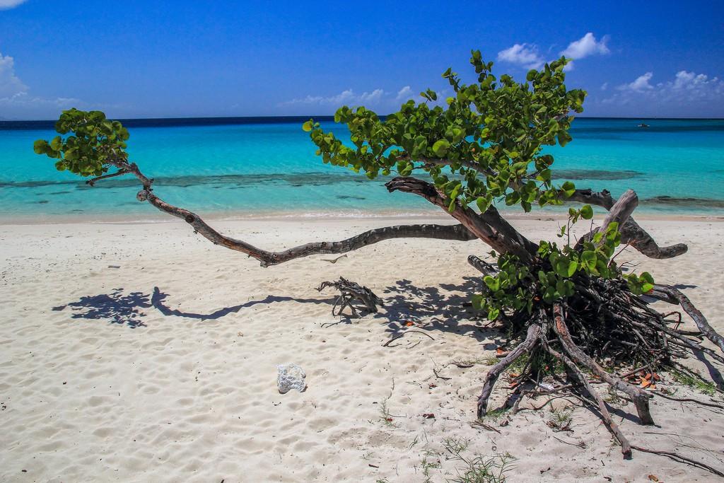 albero su spiaggia di sabbia bianca con mare turchese