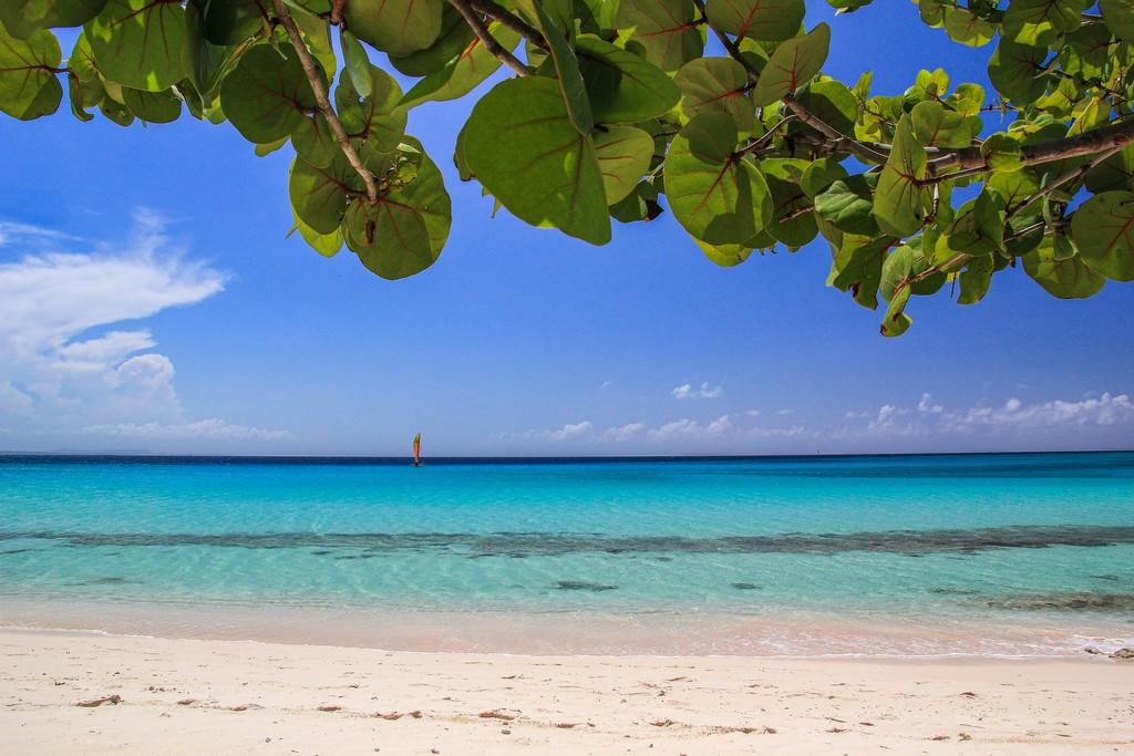 spiaggia di sabbia bianca con mare turchese con primo piano di foglie