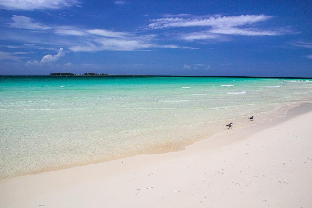 spiaggia di sabbia bianca con mare turchese isola in fondo e gabbiani