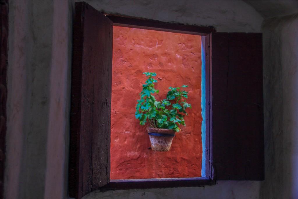 pianta attraverso la finestra
