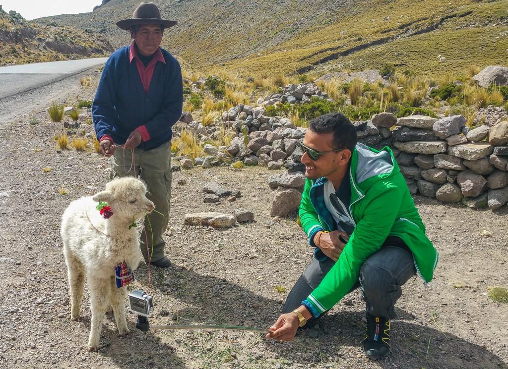 alpaca e uomini