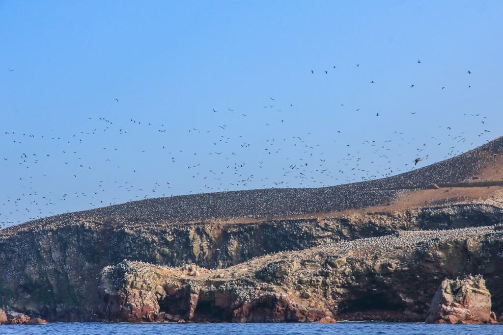 Milioni di uccelli volano sulle Islas Ballestas
