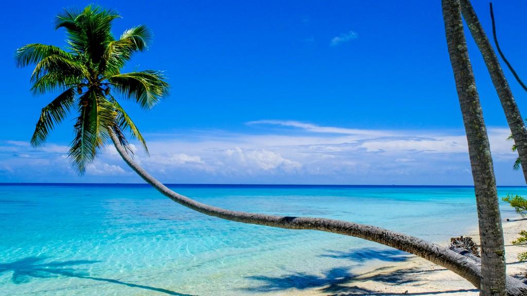 guida a fakarava palma protesa sul mare