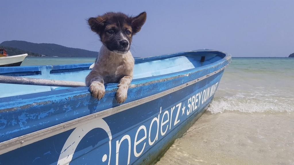 10 cose da fare a Koh Rong Samloem cucciolo su una barca