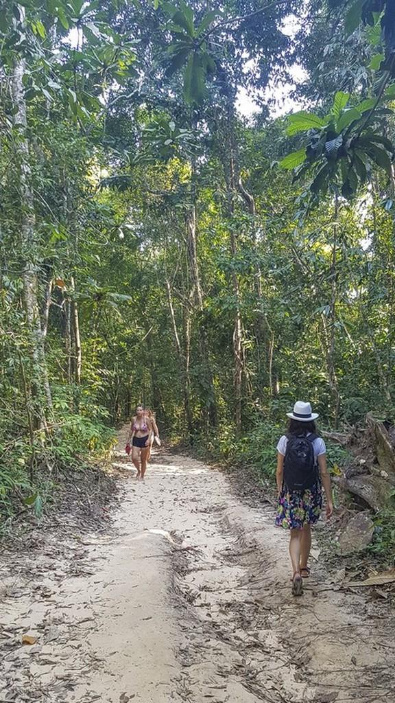 passeggiata nella giungla