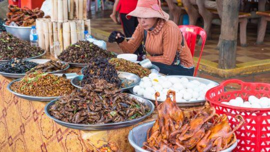 bancarella di insetti con donna