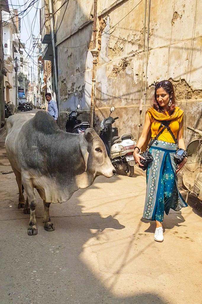 ragazza con mucca accanto