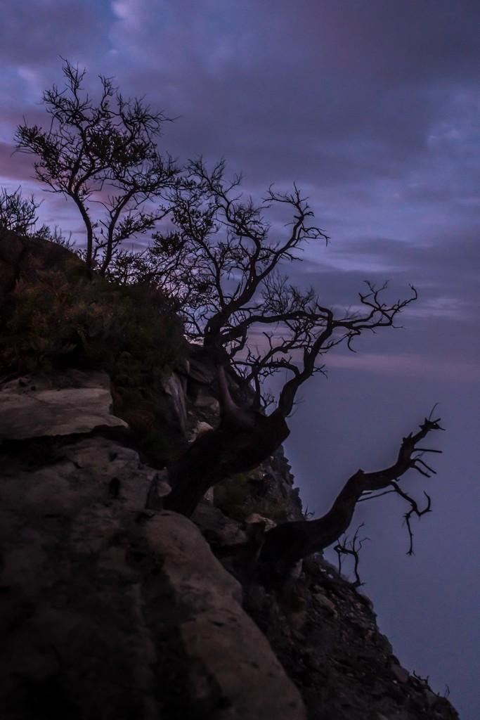 Arbusti sospesi sul crinale interno del cratere