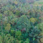 Dove dormire per visitare il Kawah Ijen: una tree house