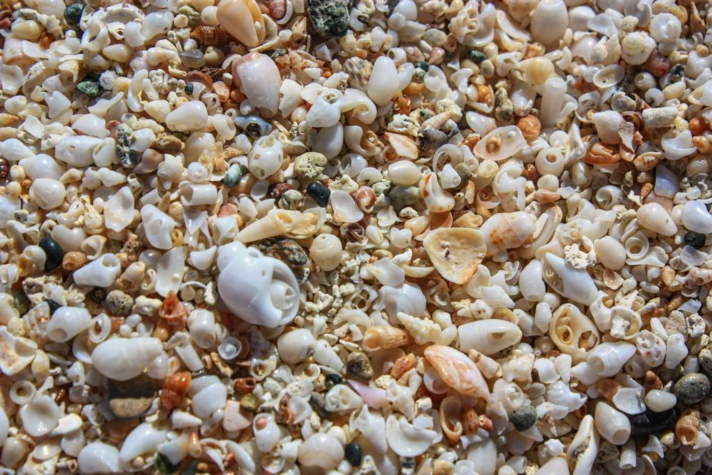 sabbia fatta di conchiglie