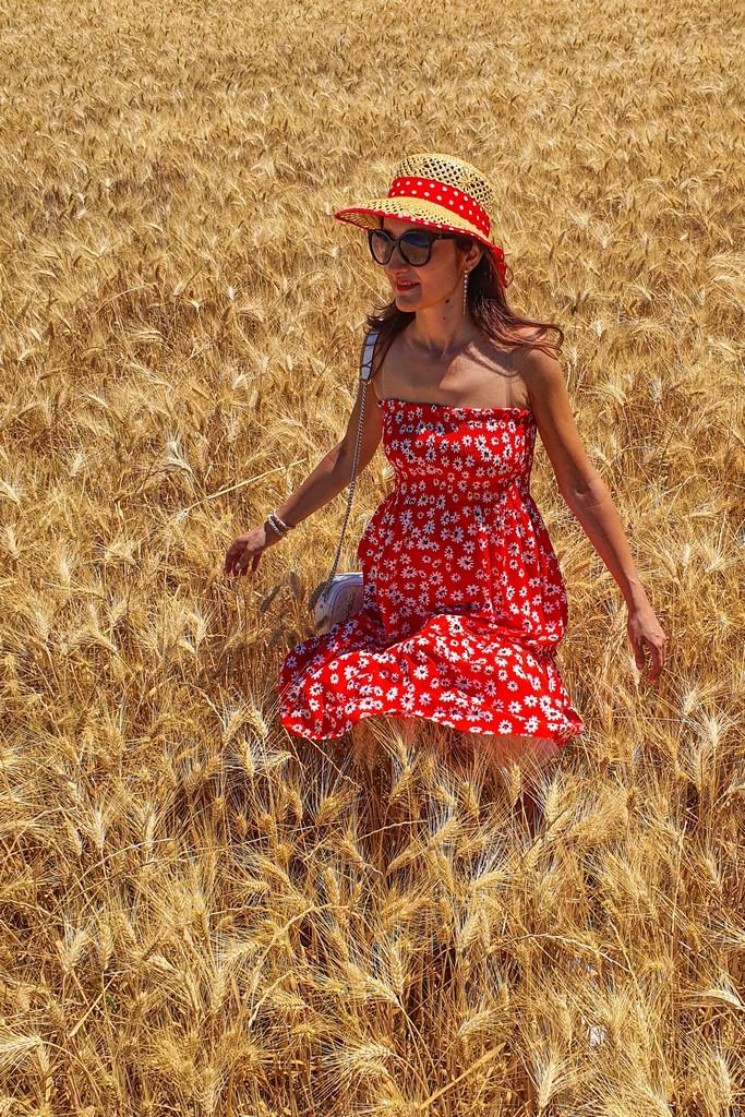 campo di grano con persona