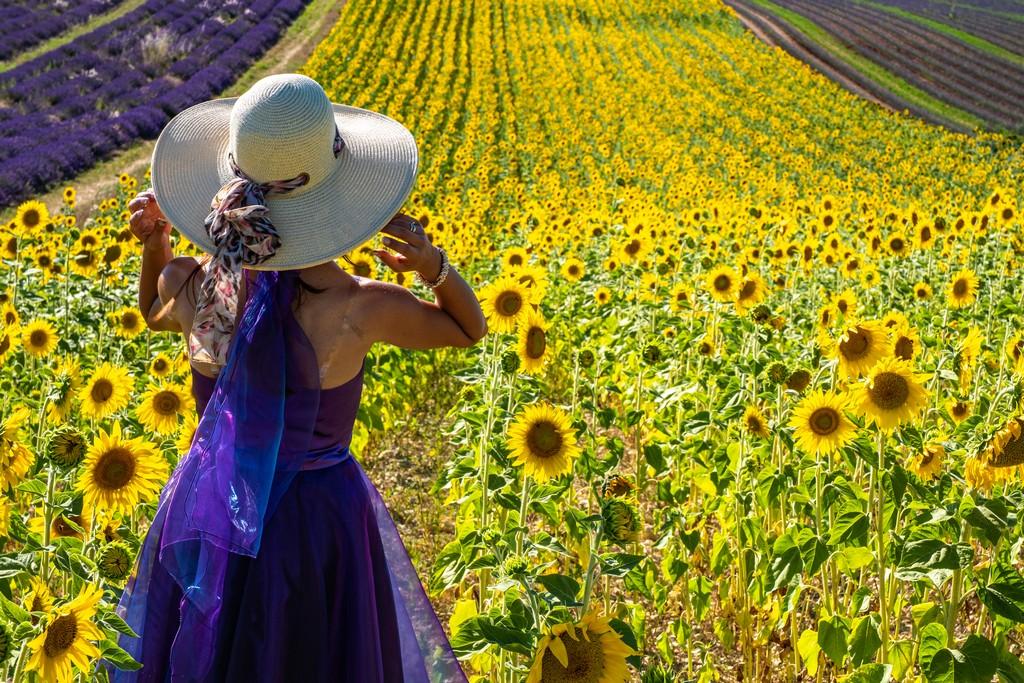 campo di girasoli con ragazza in viola