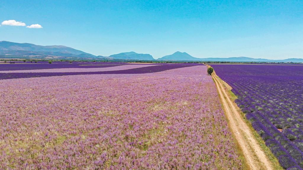 I campi di lavanda più instagrammabili vista aerea dei campi del plateau