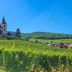 Guida alla Route des Vins sud Alsazia: da Haut-Koenigsbourg a Thann