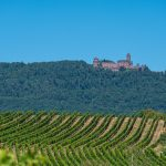 Guida alla Route des Vins nord Alsazia: da Marlenheim a Haut-Koenigsbourg