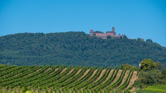 guida alla route des vins nord alsazia